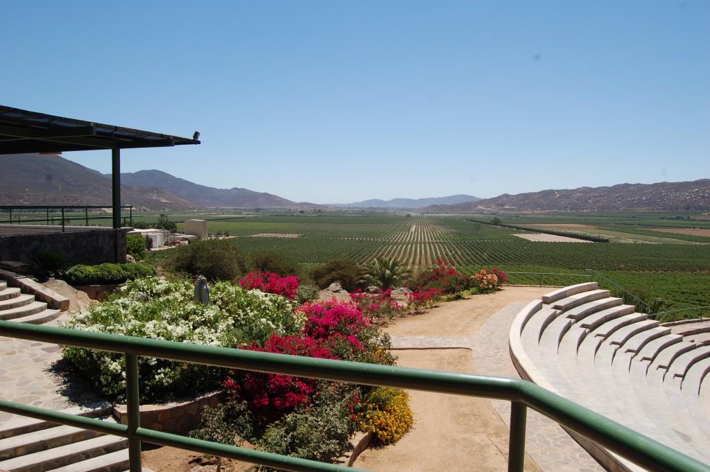 L.A. Cetto, Valle de Guadalupe