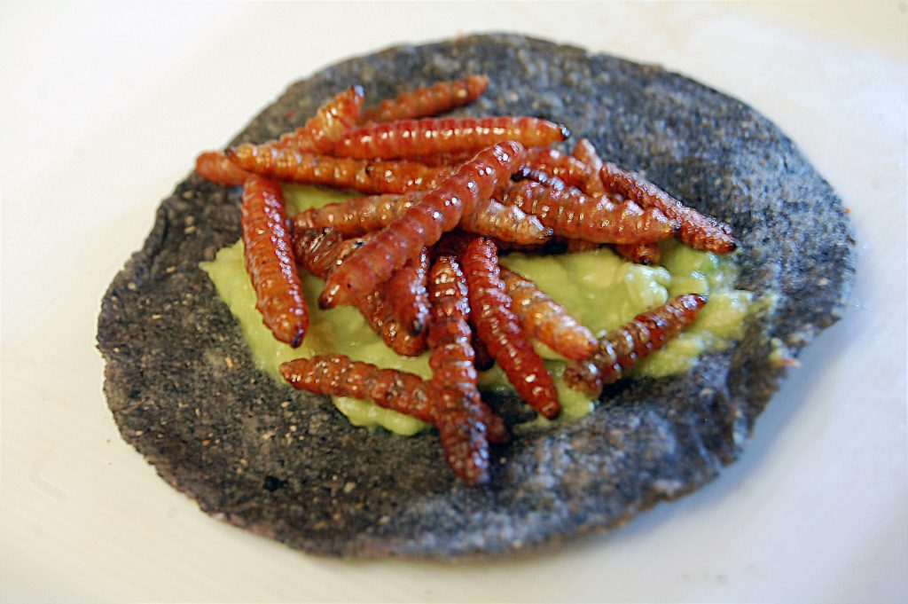 Maguey worms with avocado on a blue corn tortilla at Cien Años, Tijuana, Baja California, Mexico