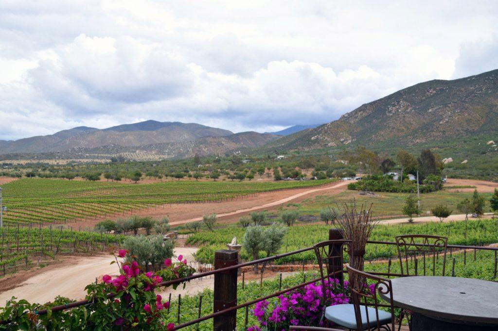 Viñedos de Garza, Valle de Guadalupe, Baja California, Mexico