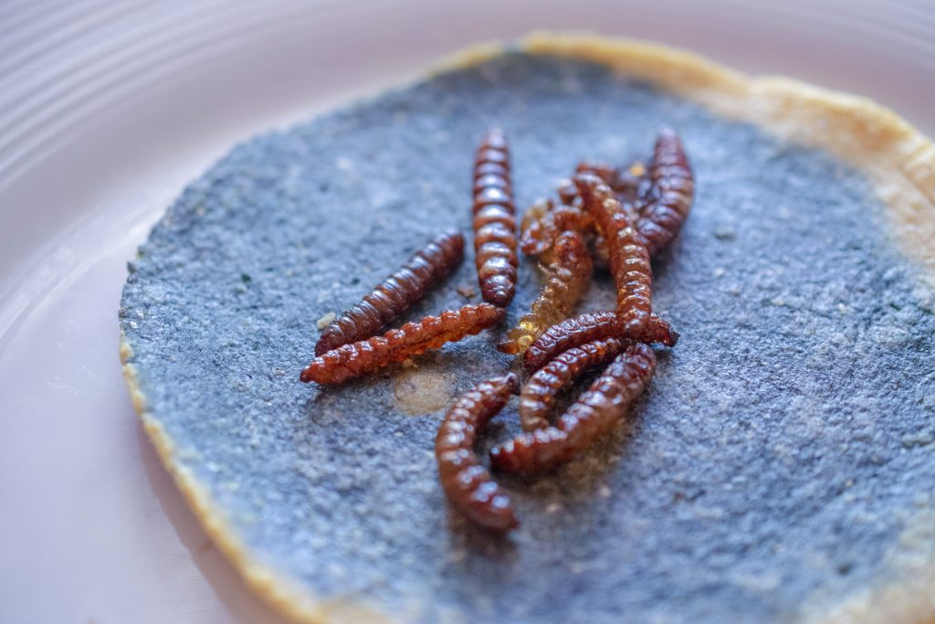 Edible Insects, Chinicules, Taco, Restaurant Cien Años, Chef Jose Sparza, Tijuana, Baja California, Mexico