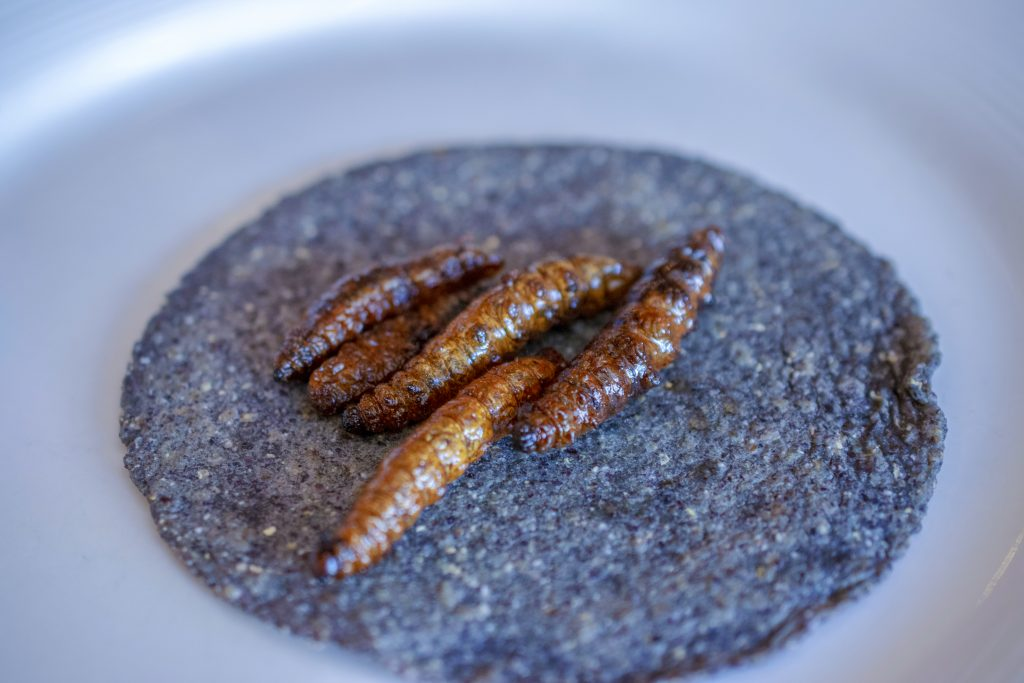 Edible Insects, Gusanos de Maguey, Taco, Restaurant Cien Años, Chef Jose Sparza, Tijuana, Baja California, Mexico